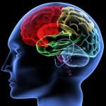 Wie steuere ich mein Gehirn: Führung und Neurowissenschaften