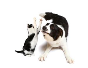 Hund und Katz 5/2011